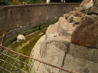 Bear Enclosure